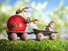 cooperative ants